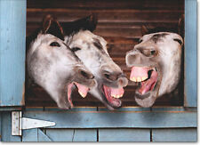 3 Donkeys Laughing Funny Birthday Card - Greeting Card by Avanti Press