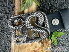 Gürtelschnalle Buckle Schlange Snake Larp Schließe für Buckle-Gürtel Biker Gotik