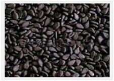1500 BLACK SESAME Sesamum Indicum Vegetable Flower Seeds + Gift & Comb S/H