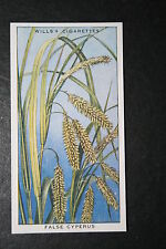 False Cyperus  Sedge  Water Garden Plant    Vintage Illustrated Colour Card  VGC