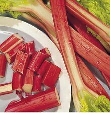 Rhubarb Glaskins Perpetual - 50 Seeds - Easy Fast Grower