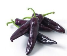 Vegatable seeds - Hot Long Capsicum purple Chili peppers 20 seeds CayenneNO-GMO