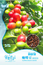 Coffee Bean Seeds 8pcs/bag Home Garden DIY Bonsai Tree Seeds Original Packing