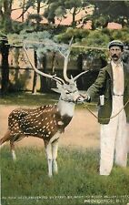 c1905 An India Deer at Roger Williams Park, Providence, Rhode Island Postcard