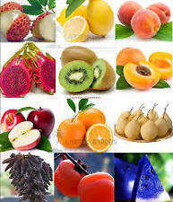 Imported Bonsai Fruit Seeds Combo Kit* APPLE*LEMON*ORANGE*GRAPE*GUAVA