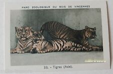 Image Collection CHROMO : TIGRES (ASIE) (33) - PARC ZOOLOGIQUE de VINCENNES