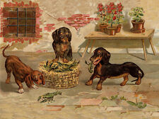 DACHSHUND CHARMING DOG GREETINGS NOTE CARD CUTE DOGS PLAY WITH LOBSTER BASKET