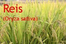***Reisöl, Reiskeimöl (Thailand)  200ml, Massageöl - feuchtigkeitsspendend!!