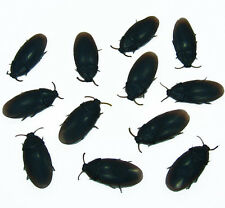 12 FAKE ROACHES COCKROACHES BUG JOKE REALISTIC RUBBER INSECT PRANK GIFT FUN