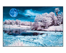 "Original Fine Art Photo 8x10"" Print Color Infrared White Trees Large Moon Water"