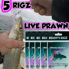 5 Whiting Whispera Fishing Rigs By Reedy's Rigz Flasher Rig Bait Size 4 Hook Fly