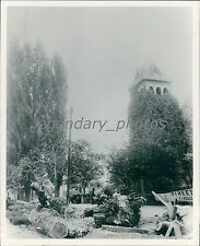 Fallen Trees in Salt Lake City Historical Scene Original News Service Photo