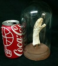 VINTAGE REAL BLACK FOREST COBRA SNAKE TAXIDERMY DISPLAY,REPTILE,ODDITY,CURIO,ODD