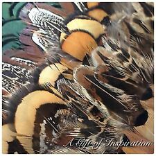 Mix of 25 Amazing Pheasant feathers 5 of each colour for craft/millinery/jewel