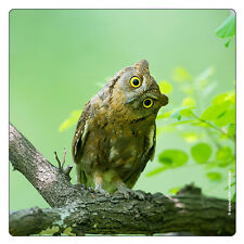 Kühlschrank - Magnet: kleine Eule sitzt auf dem Baum - hibou - little owl
