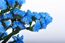 50+  HEAVENLY BLUE STATICE FLOWER SEEDS / ANNUAL /  GREAT GIFT