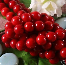 Wholesale Red Coral Round Loose Beads 15''inch 8mm