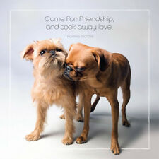 Dog Studio Greeting Card- CAME FOR FRIENDSHIP (BR Griffons) -#DS-C-FB-913-020