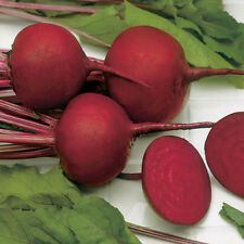 Beetroot 'Wodan' (Globe) 100 Seeds