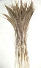 """100 Peacock Sword Feathers 20-25"""" L Bleached & Dyed 21 in colors  USA Seller"""