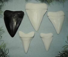 LOT OF 5 GREAT WHITE SHARK TEETH REPLICA, VERY NICE!!/MEGALODON TOOTH