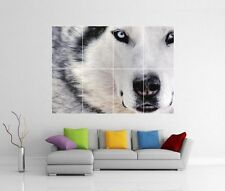 HUSKY DOG SNOW GIANT WALL ART PICTURE PRINT PHOTO POSTER J88