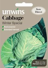 Unwins Pictorial Packet - Cabbage (Spring Greens) Winter Special - 50 Seeds