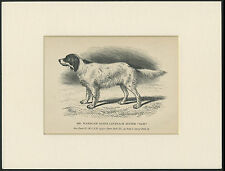 ENGLISH SETTER OLD ANTIQUE NAMED DOG ENGRAVING / PRINT MOUNTED READY TO FRAME