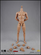 COOMODEL COO Standard Male Muscle High Body(27cm) Skin color 2.0 Version 1/6