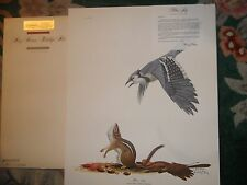 RAY HARM BLUEJAY AND CHIPMUNK-BUY 3 PRINTS AT LEAST 1 $65.00 GET 1 FREE