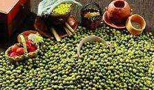 1 Pound MUNG Bean Seeds. Sprouting & Shell. Asian Cuisine. Premium USA Heirloom