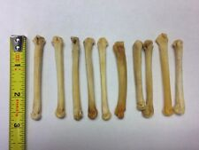 "COYOTE FOOT BONES SET OF 10 (AVG 2.5"" EA) WICCA PALO SANTERIA VOODOO FREE SHIP!"