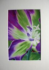 MAYTIME TULIP - PRINT OF ORIGINAL ART - LIMITED EDITION - MOUNTED