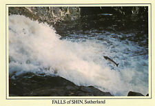 POSTCARD - SCOTLAND- Falls of Shin - Anne Baxter - Shows salmon leaping