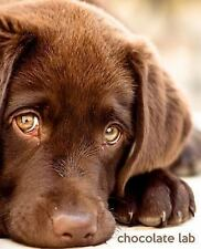 So Cute Puppies: Chocolate Lab : A Gift Journal for People Who Love Dogs:...