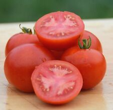 Cyril's Choice Tomato Seeds- Organic- Rare Heirloom Variety- 30+ 2017 Seeds