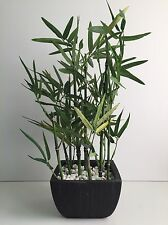 * NEW MODERN CONTEMPORARY ARTIFICIAL BAMBOO PLANT black ceramic pot & stones .