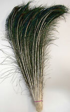 "75 Pcs PEACOCK SWORDS Natural Feathers 15""-20"" Craft/Pad/Decor/Costume/Hats/Art"
