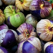 Purple Tomatillo Tomato Heirloom 50  seeds RARE No GMO's 100% Organic