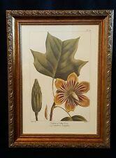 Bombay Co Framed Print Artwork Poplar Tulip Tree botanical wall decor