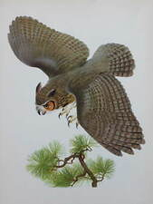 vintage print Great Horned Owl by Menaboni