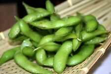 200 Bean Seeds, Edamame, Edible soybean ,Organic NON-GMO untreated Seed