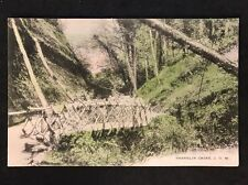 Vintage Postcard - Isle Of Wight #51 - RP Shanklin Chine - Wykeham Collection