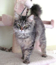 FOR SALE: RESCUED KITTY PHOTO~Help Feed 74 Cats & Kittens Cat Food,Toys,Supplies