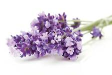 Aromatix Premium Quality LAVENDER Candle Making Fragrance Oil 10ml