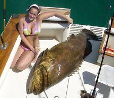 P-Line Spectrex IV Braid Fishing Spool (500-Yard 130-Pound White) Grouper Tuna
