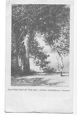 Vintage Italian Postcard - Old Pine Tree - Sorrento - 1910s - 1920s