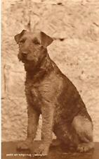 An Airedale Terrier RP old pc used Judges 12437