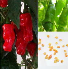Organic Peter Pepper Seeds ,special ,funny Capsicum annuum RED plant 20Pcs/Bag E