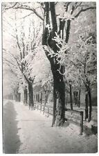 Original 1918 TIROL winterliche Baumstudie von Leo Stainer, Innsbruck